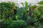 The Giant Houseplant Takeover