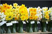 The Daffodil Show
